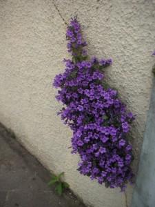 plant through wall